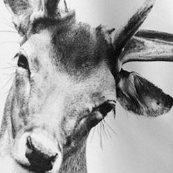 Theedoeken op z'n hipst met animal fotoprints