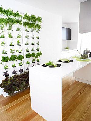 Minigarden | bouw een groene muur voor binnen en buiten