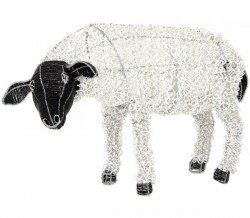 sheep_looking_web
