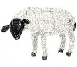 sheep_looking_web