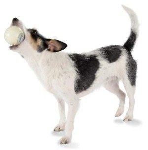 fuzzylicious-planetdog