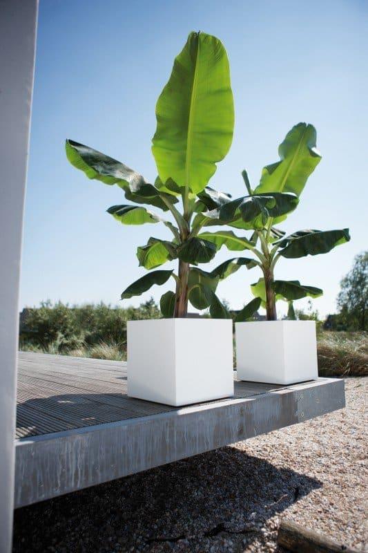 Verrijdbare plantenbak: hip, handig en stijlvol