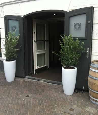olijfboom_in_pot_met_licht_chicplants-hippeshops