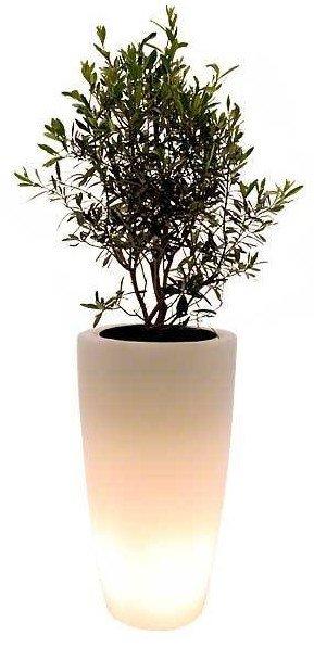 olive_glow_chicplants_hippeshops
