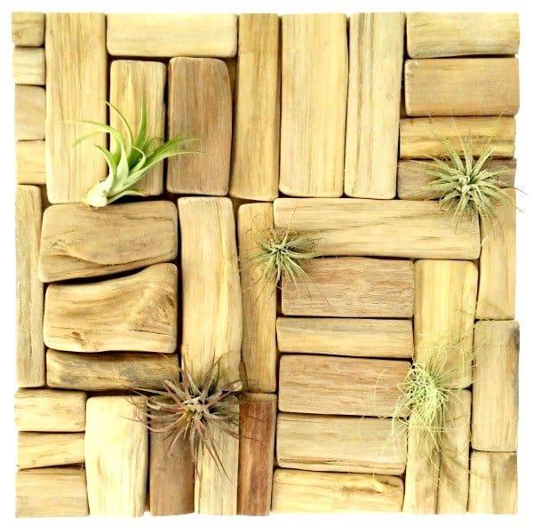 Houtspul brengt waanzinnige mix van luchtplantjes en houten accessoires