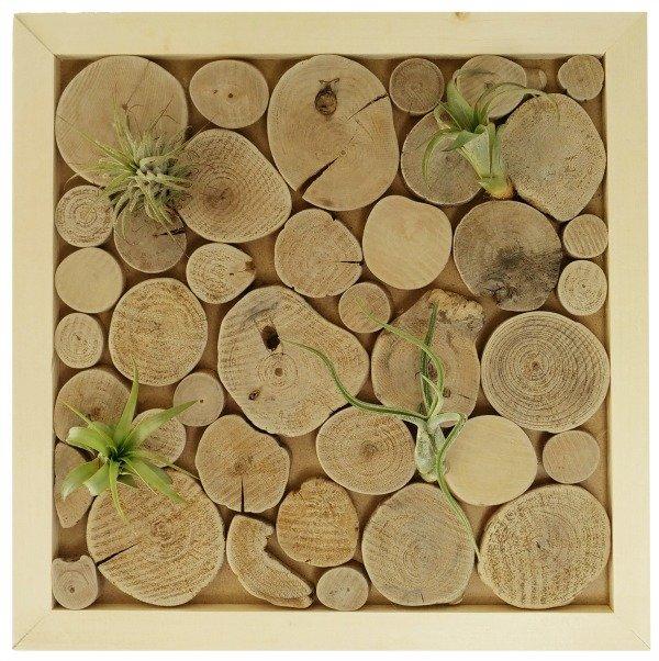wanddecoratie-luchtplantjes-houtplakjes