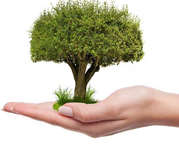 plant een boom handig goed duurzame keuze