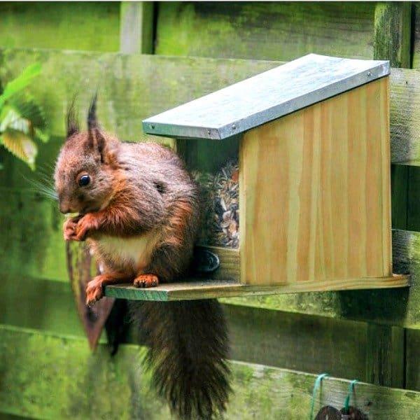 eekhoornhuisje diervriendelijke tuin vogelhuisjes.nl