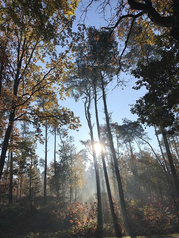 planteenboom-bosbeekvallei-oeterdal-natuurhuisje-duurzaam