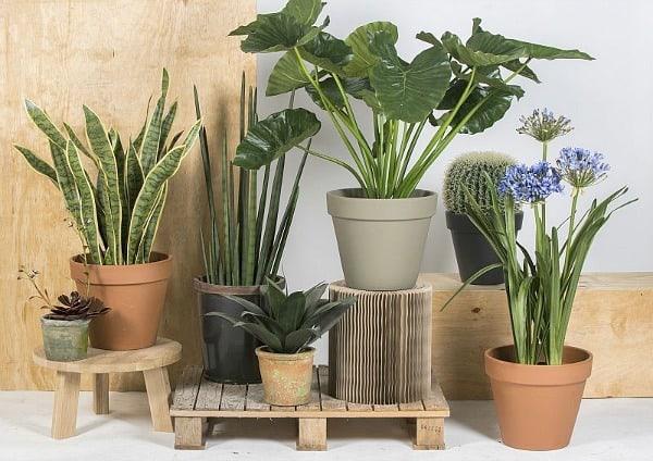 kunstplanten van toptuincentrum