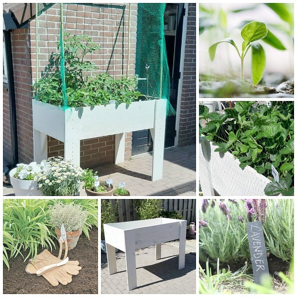 eetbare tuin moestuinbak op poten benodigdheden zelfmaken