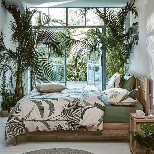 grote kamerplanten kopen