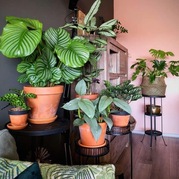 grote planten online kopen