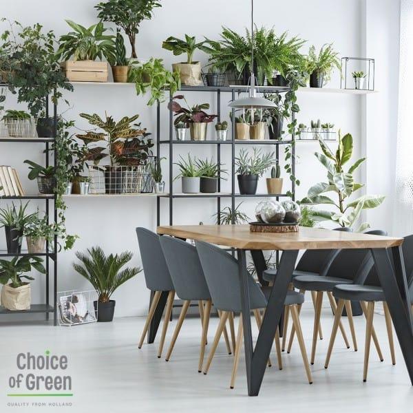 choice of green planten webshop