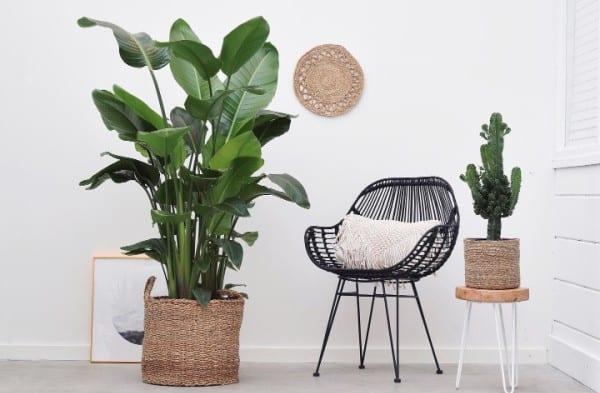 online planten kopen green bubble