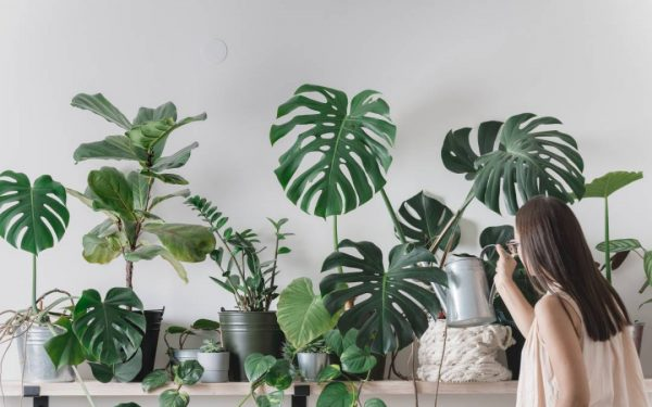 planten webshop hellogreen delivering nature