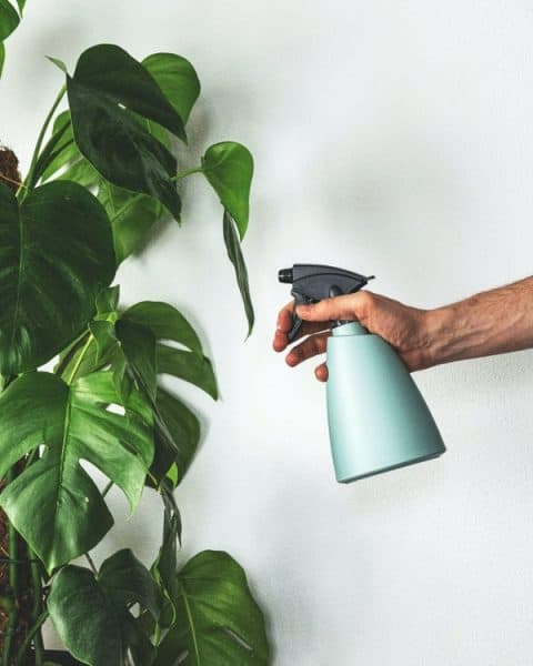 plantverzorging easy planten