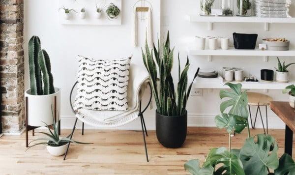 online planten kopen plantsome