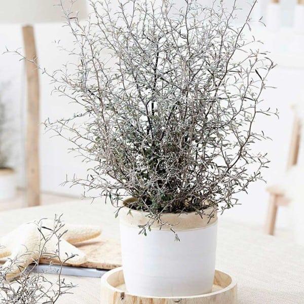 online planten kopen studioplant