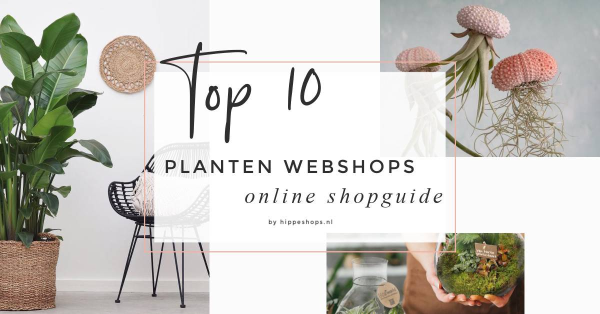 Deze 10 hippe planten webshops bezorgen de mooiste kamerplanten bij jou thuis
