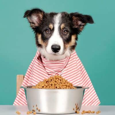 De 5 tips bij gezond hondenvoer bestellen voor jouw viervoeter