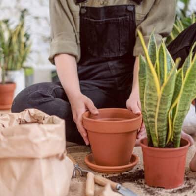 Zo verpot je jouw planten voor het beste resultaat